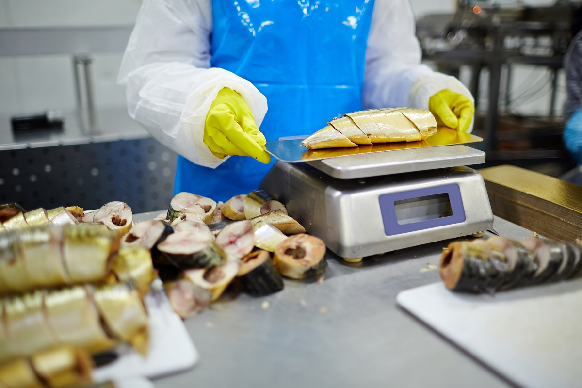 Gloved staff of seafood plant checking weight of smoked sardine pieces before canning